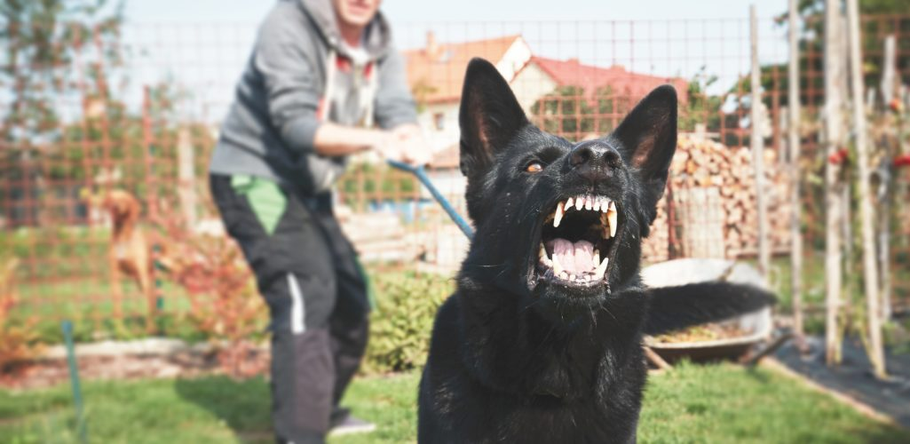 Dog Bites and Your Homeowner's Insurance